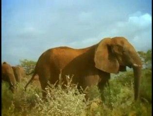 Hormonal Elephants