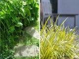 Paysagiste, www.lesbojardins.com, aménagement  jardin, créer un jardin, modèles de jardins, jardin terrasse, entretien jardin