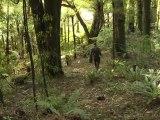 Rarität: Weißes Kiwi-Küken in Neuseeland