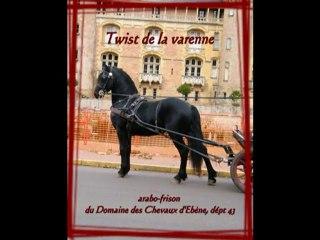 Attelage Arabo-frison Twist et Sébastien Mourier