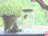Bocal à papillon magique Mybutterfly - Mycrazystuff.com