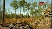 RETOUR SUR...,La forêt des Landes