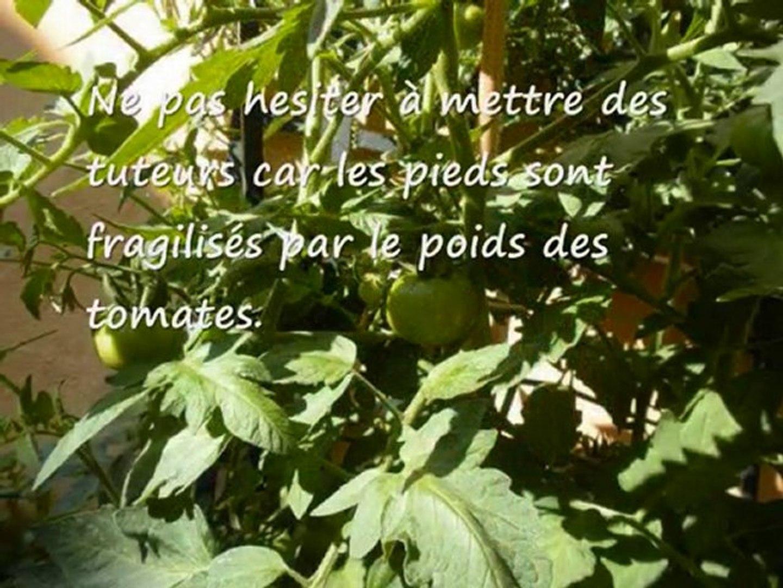 Faire Pousser Des Tomates Grappe Sur Son Balcon