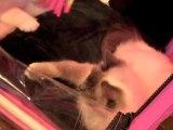 Artois Expo : salon du chat
