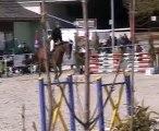 Qualypso cheval selle français de 6 and par Dollar de Sémill
