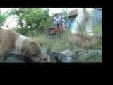 Watch Documentary   Short films   Chicken a