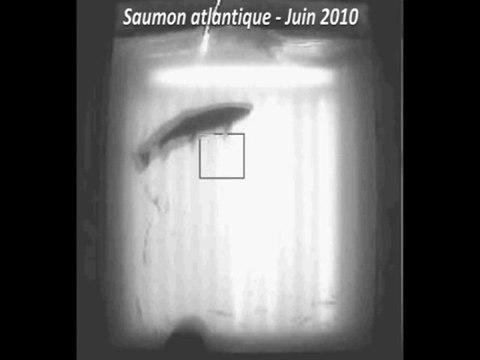 Passages de différentes espèces à Châtellerault - LOGRAMI