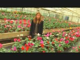 Enseignement agricole 100% nature - Horticulture