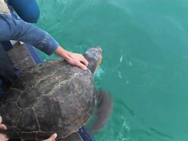 Sauvegarde des tortues marines en méditerranée