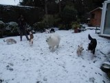 30 Nov 2010 The Fluffters Snowy Playtime