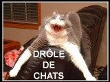 Drôle de chats -  Funny cats
