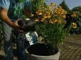 Planter des plantes en fleurs en beau contenant - C Y L
