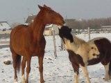 Just et rambo 3 (3 décembre 2010)