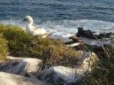 Galapagos Islands travel: Kathys slideshow of Espanola