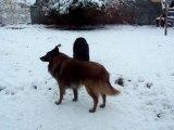 http://www.dailymotion.com/video/xfyep3_elfe-dans-la-neige-2