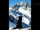 ski rando -  Fond Queyras