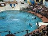 Spéctacle des dauphins