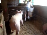 Allegany County Fair: a girl and her pig.  Angelica, NY
