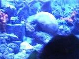 Jellyfish and Shrimp in Atlantis, Paradise Island Bahamas