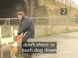 How To Stay Safe When A Dog Approaches You