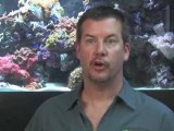 Fishkeeping: How To Treat Ick : What is 'ick' and how do I treat it?