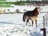 chevaux dans la neige... Hiver 2010