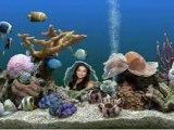 Pratic Aquarium