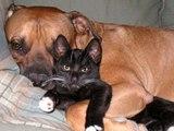 Chiens et chats: les meilleures vidéos de 2010