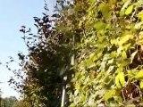 Aménagement & entretien de jardins Anhée - Verts Espaces
