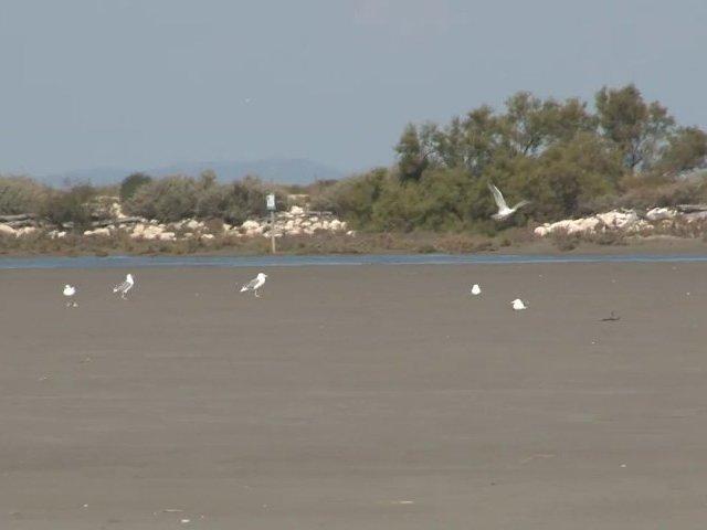 Idée de Balade, la Digue à la Mer en Camargue
