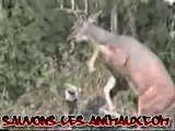 vengeance animaux cerf vs chasseur