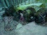 2010 1227 Macky and her Shih Tzu puppies