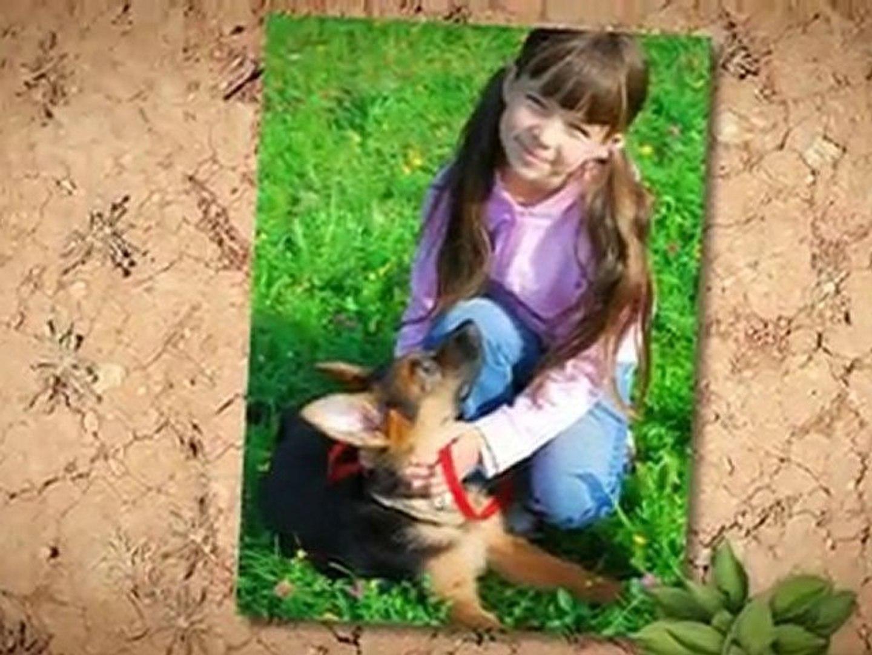 German Shepherd Puppies Video Dailymotion