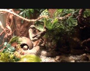 Terrarium pour bernards l'hermite terrestres