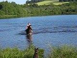 baignade avec les chevaux 145