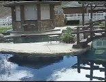 North San Diego Swimming Pool Builder|Swimming Pool San Die