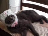 Chat se déguise tout seul en lapin ! Incroyable [Lol Cat]