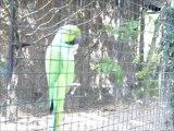 OISEAU RIGOLO PARC AUX OISEAUX 2009 FOUCAULT THIERRY