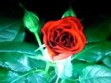 benim yorumumdan çiçeğim