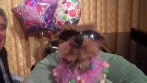 Schmitty Sings Happy Birthday To Betty White - Sorta!