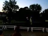 caroussel chevaux 2