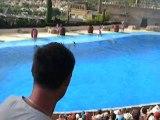 spectacle de dauphins a mundomar benidorm espana