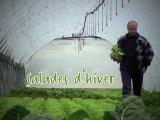 Salades d'hiver de Stéphane Guihard