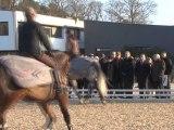 Chantal Jouanno visite l'Ecole Nationale d'Equitation