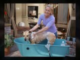 Dog Bath Tubs - Grooming Tub from BoosterBath.com