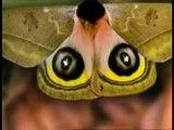 Kelebeklerin kamuflajı