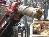Travaux TCSP: L'abattage des arbres illégal? (Nîmes)