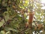 Adventures in Costa Rica with Liquid Skills