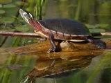 Magnifique vidéo sur la nature, superbe photos d'enfants et d'animaux !