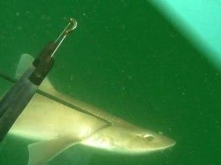 2010 vidéo chasse sousmarine